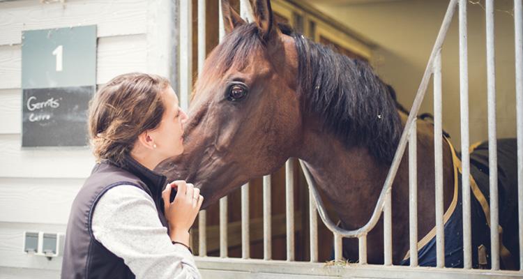 paard dierenkliniek den ham