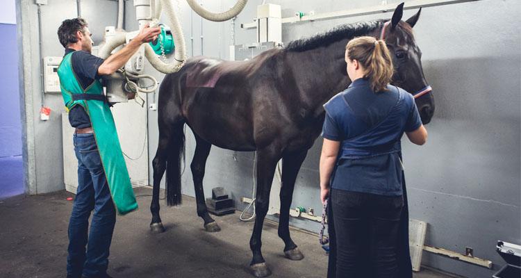 Paard keuren Dierenkliniek Den Ham